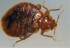 All-State Exterminating: Pest Control - Bed Bugs