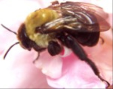 All-State Exterminating: Pest Control - Carpenter Bees