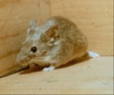 All-State Exterminating: Pest Control - House Mice